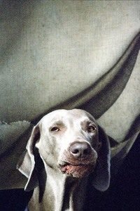 my-dog-1468552